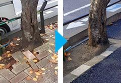 さいたま市中央区上落合の街路樹